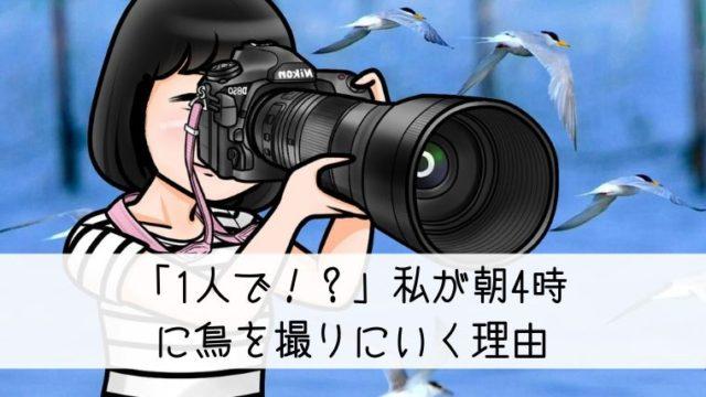 鳥を撮る理由