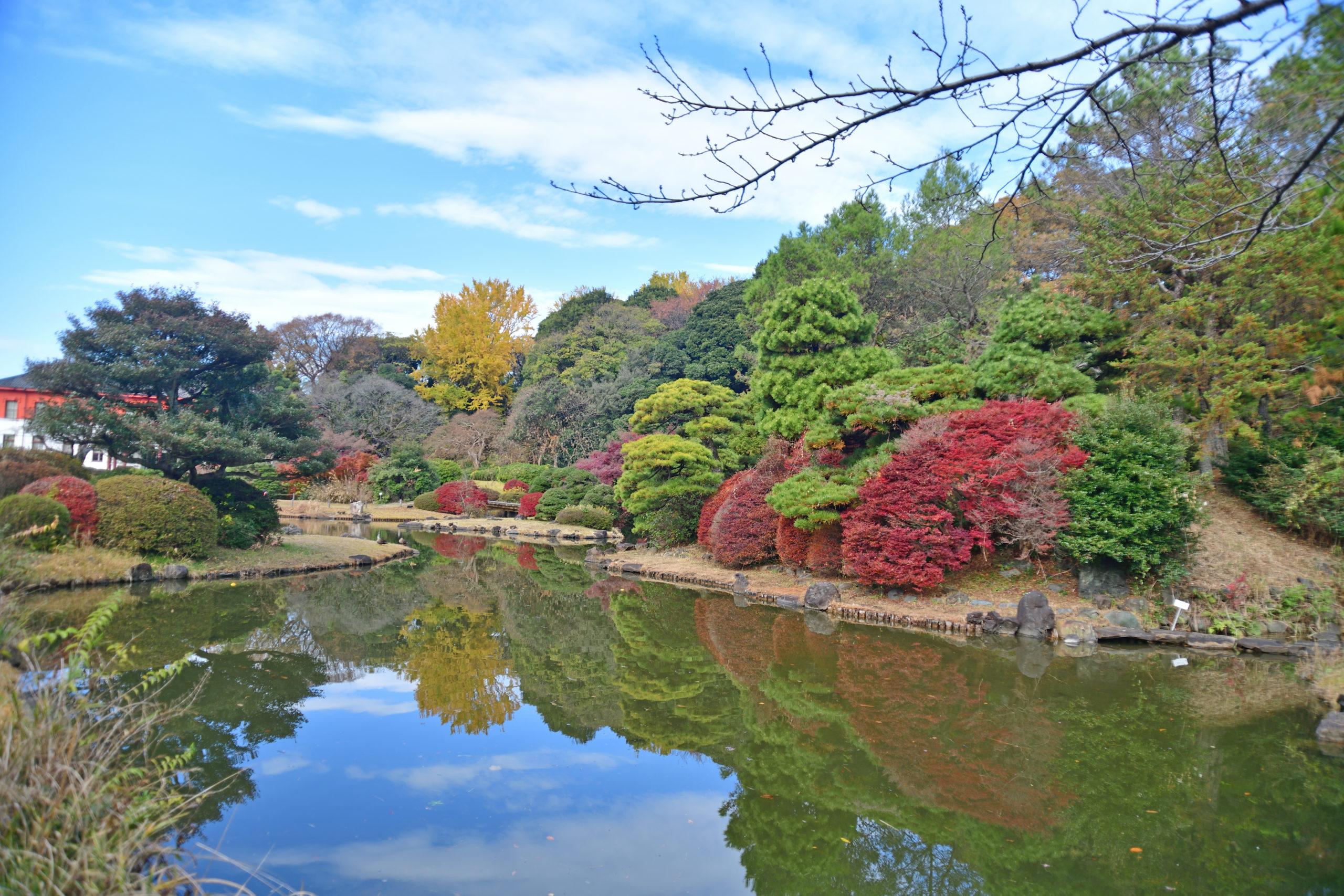 日本庭園@小石川植物園